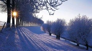 winter-landscape-tofuhaus-com-791851