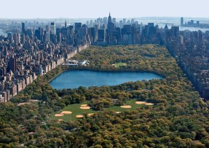 Central Park Image Credit: centralparktoursnyc.com