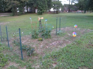 The garden. Did you know that pinwheels help keep pests away?