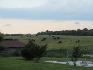 Around sunset, storms in the distance. Looking out to the cow pasture next to the farm.