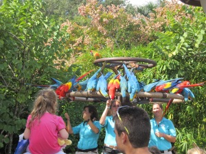 Beautiful macaws and parrots!